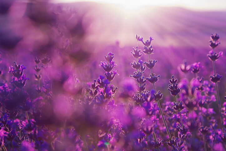オーラ 紫色