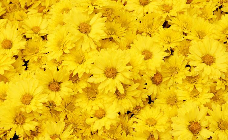 オーラ 黄色