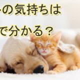 ペット占い ペットロス ペットの気持ち おすすめ 口コミ 当たる占い師 評判
