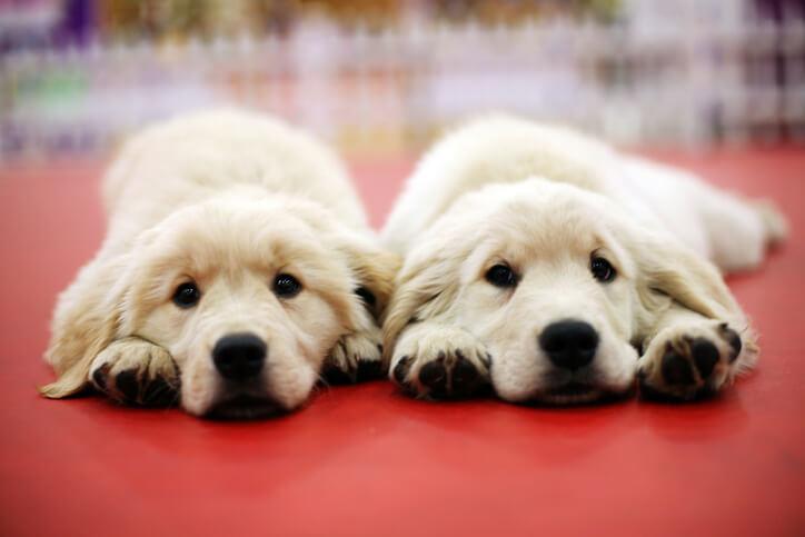 鑑定結果が同じ 双子 犬 電話占い 占い 結果 占い師